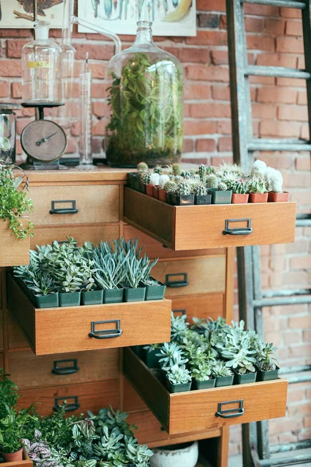 succulent garden ideas with drawers