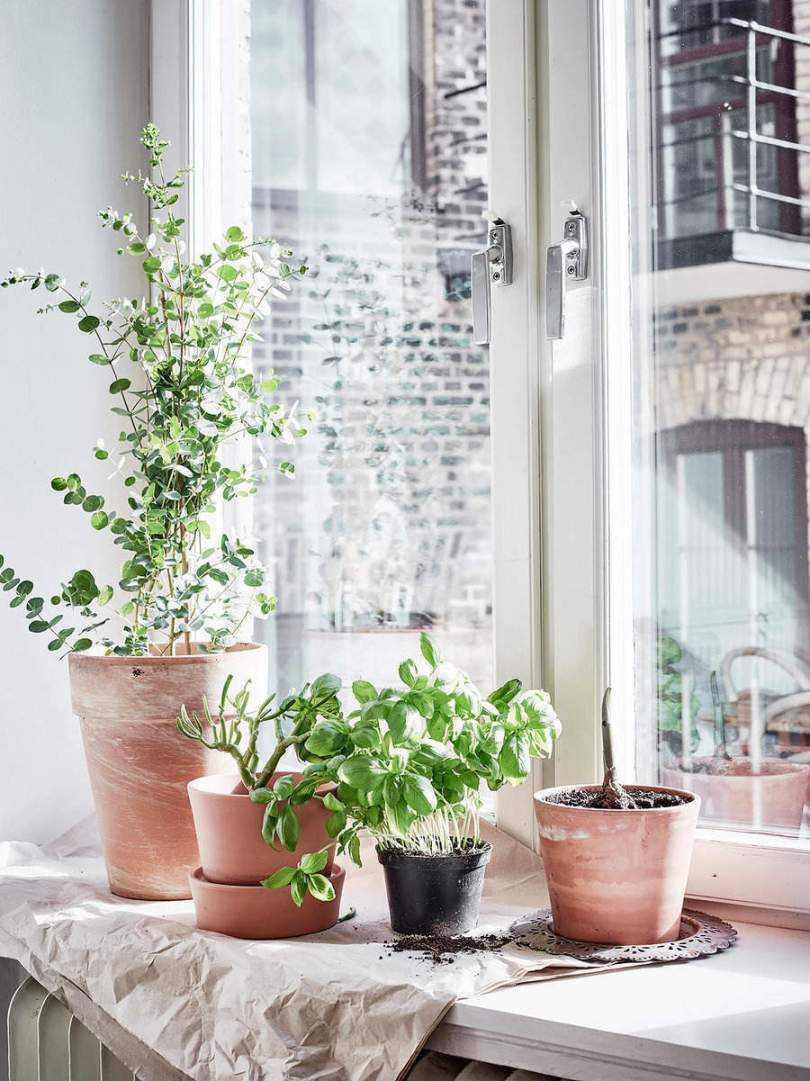Indoor plants and herbs in Scandinavian Apartment