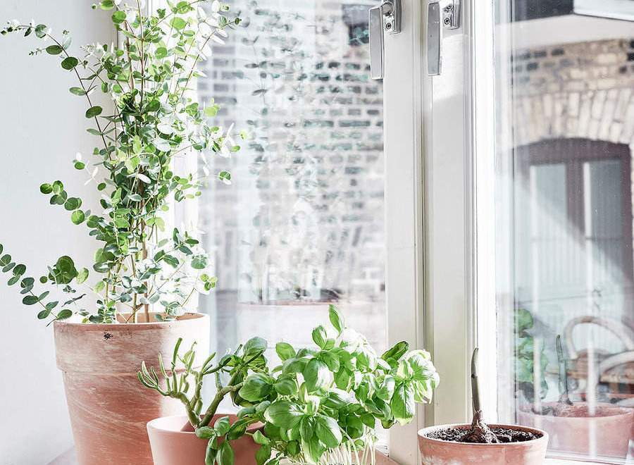Indoor Plants – Setting The Mood With Indoor Plants