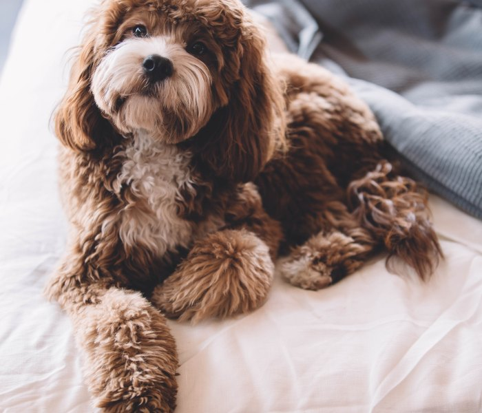 Modifying Your Home to Suit Your Dog