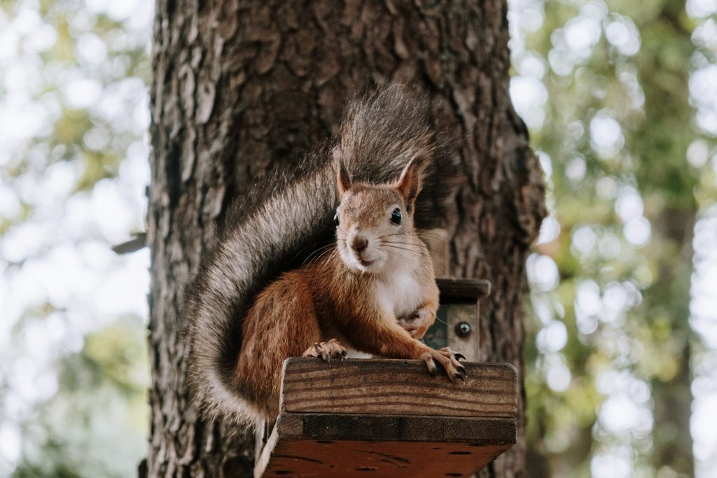 Rodent Infestation Prevention Measures To Protect Your House