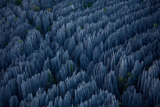 Stone Forest in Madagascar Nature Photography