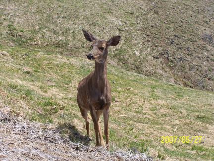 [ Deer that heard my calling ]