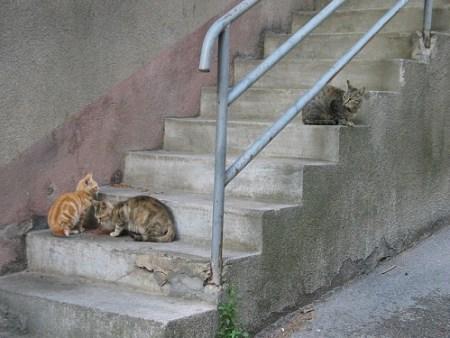 Risultati immagini per gatos callejeros