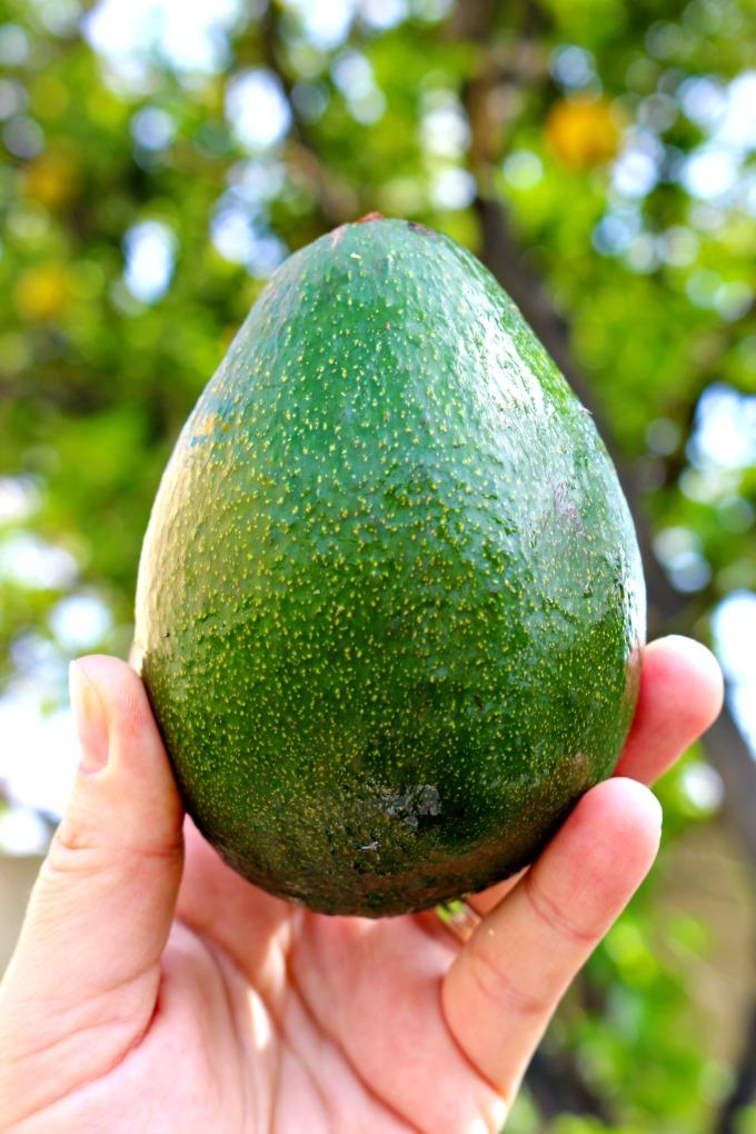 California-Avocado