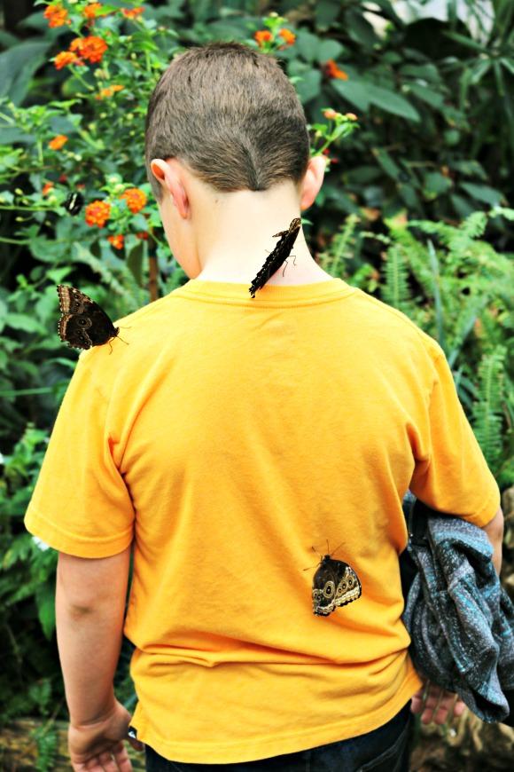 butterflies-at-butterfly-jungle