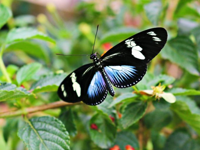 butterfly-exhibit-san-diego-zoo-safari-park