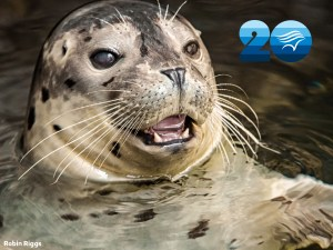 Celebrate the Aquarium of the Pacific's 20th Anniversary For Just $20!