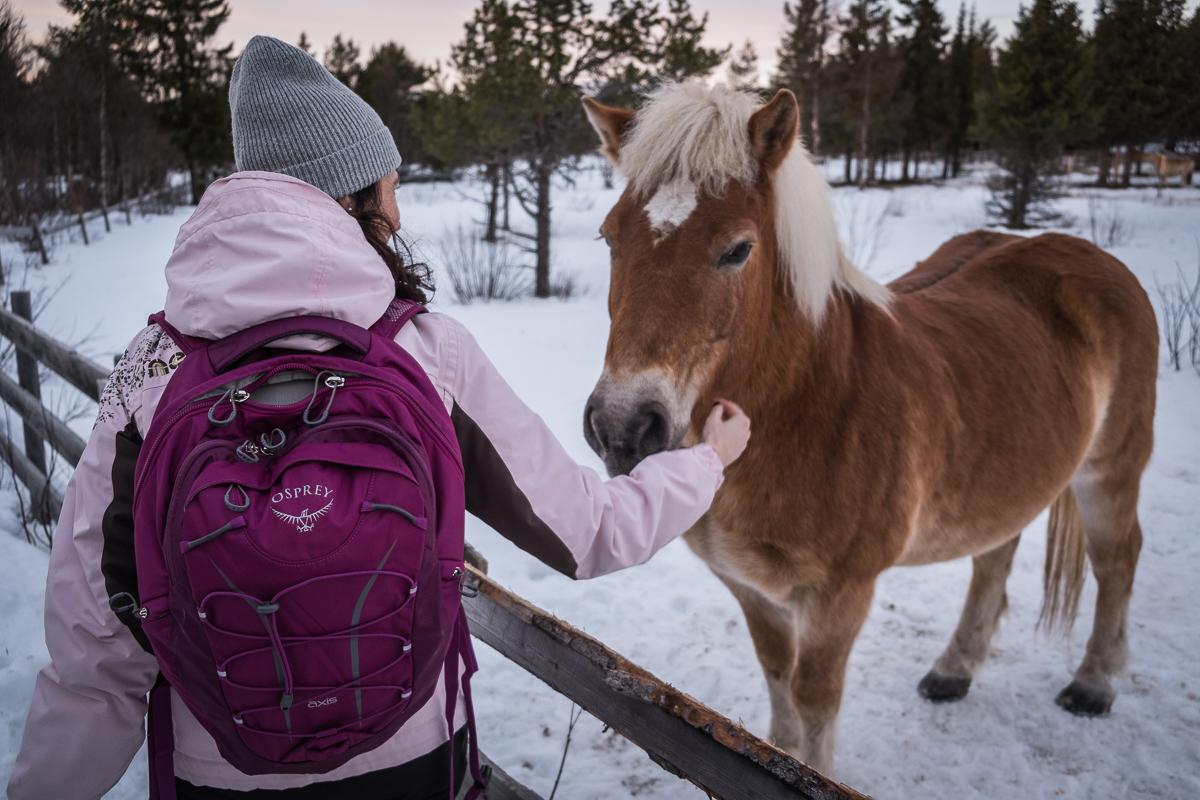 Horse at Beitostølen, Norway