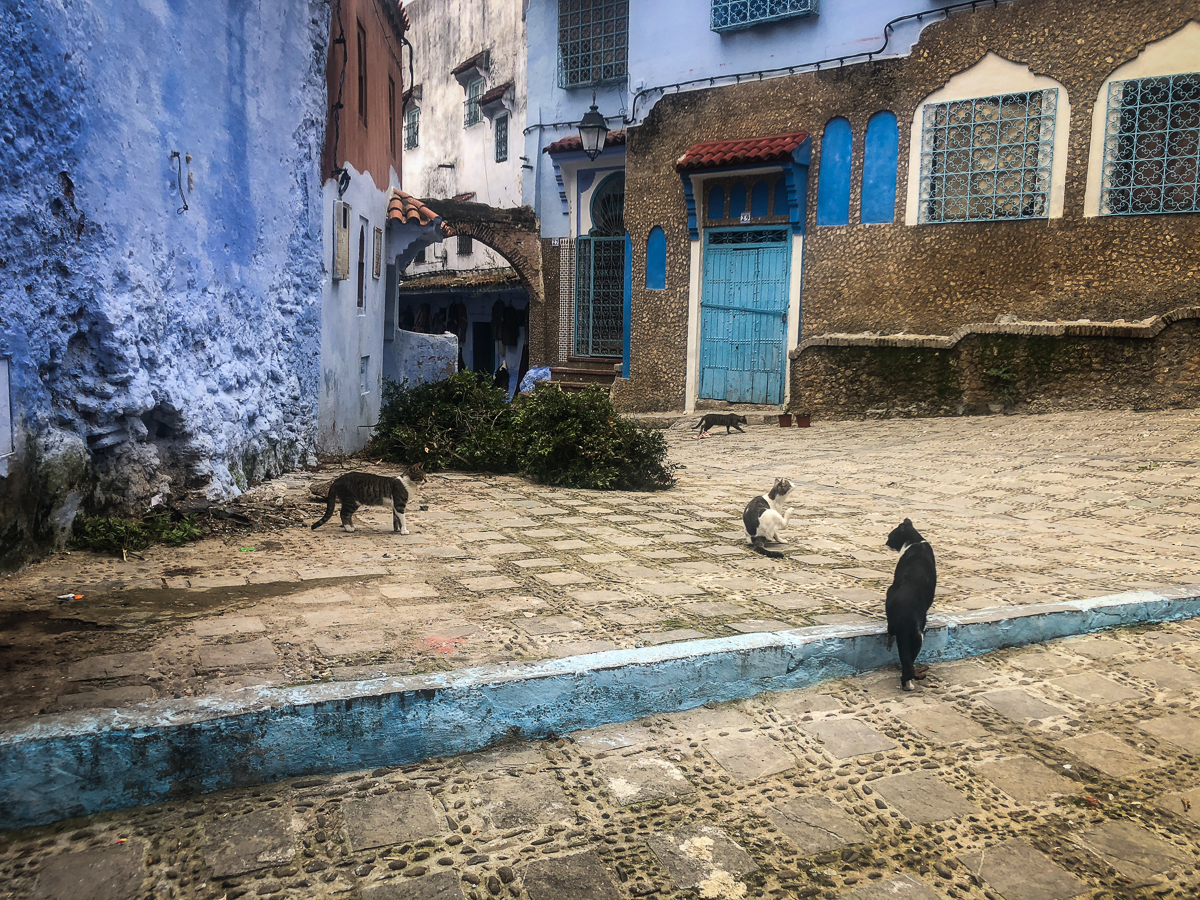 cats, Chefchaouen, Morocco