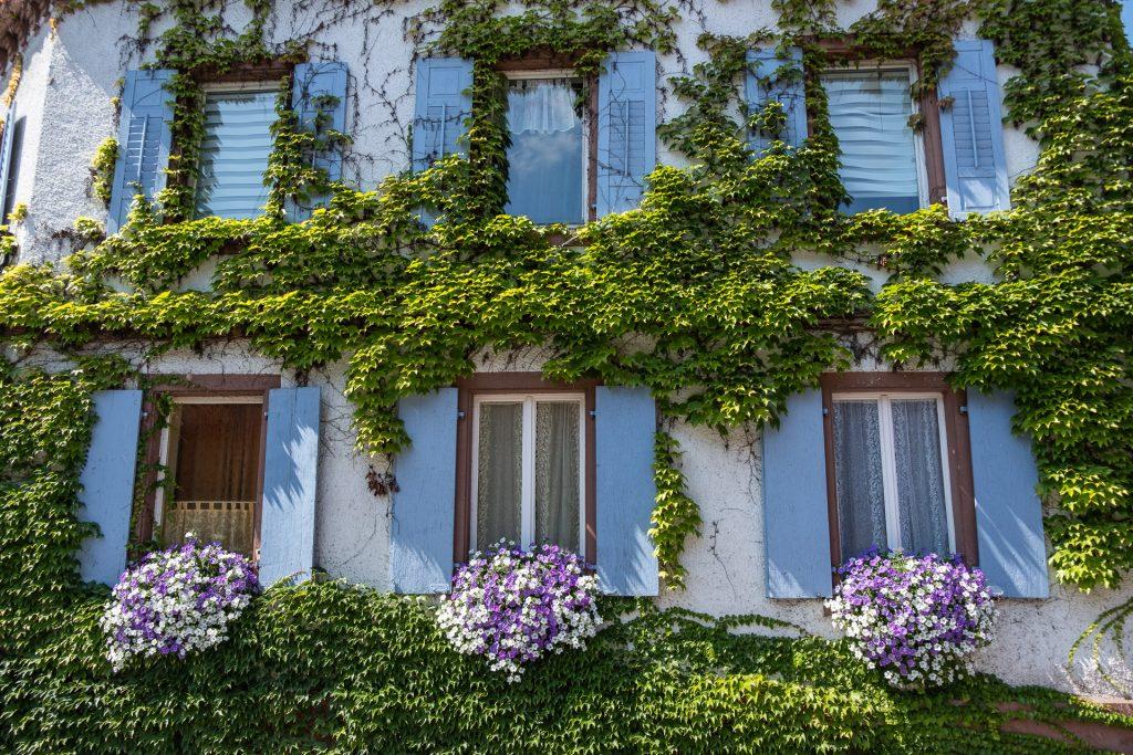 Bercher-Schmidt, vingård, hus, pastell, grønt, blomster, Tyskland