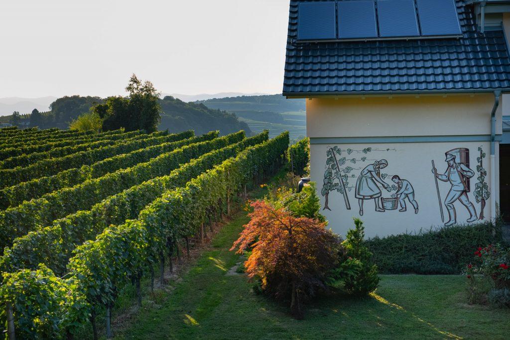 Soldnedgang, vakre farger, sommer, Kaiserstuhl, Tyskland