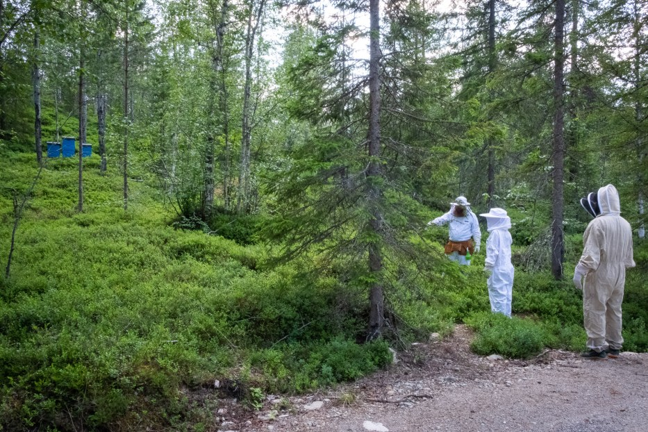 protective suits, bee, bees, forest, people