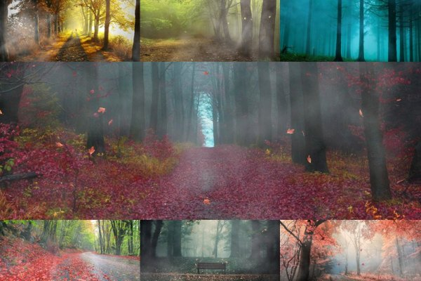 Fog In The Forest Animated Wallpaper Preview