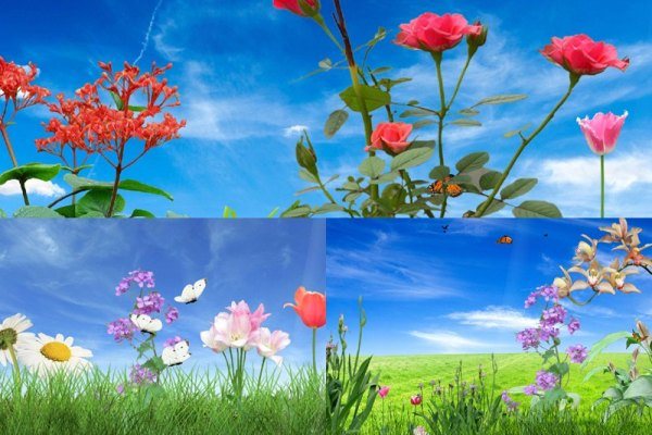 Morning Flower Animated Wallpaper Preview