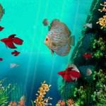 Coral Reef Aquarium 3D Animated Wallpaper