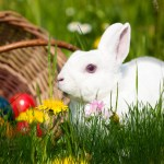 Easter Bunny Animated Wallpaper