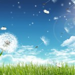 Dandelion Animated Wallpaper