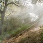 Light Forest Animated Wallpaper