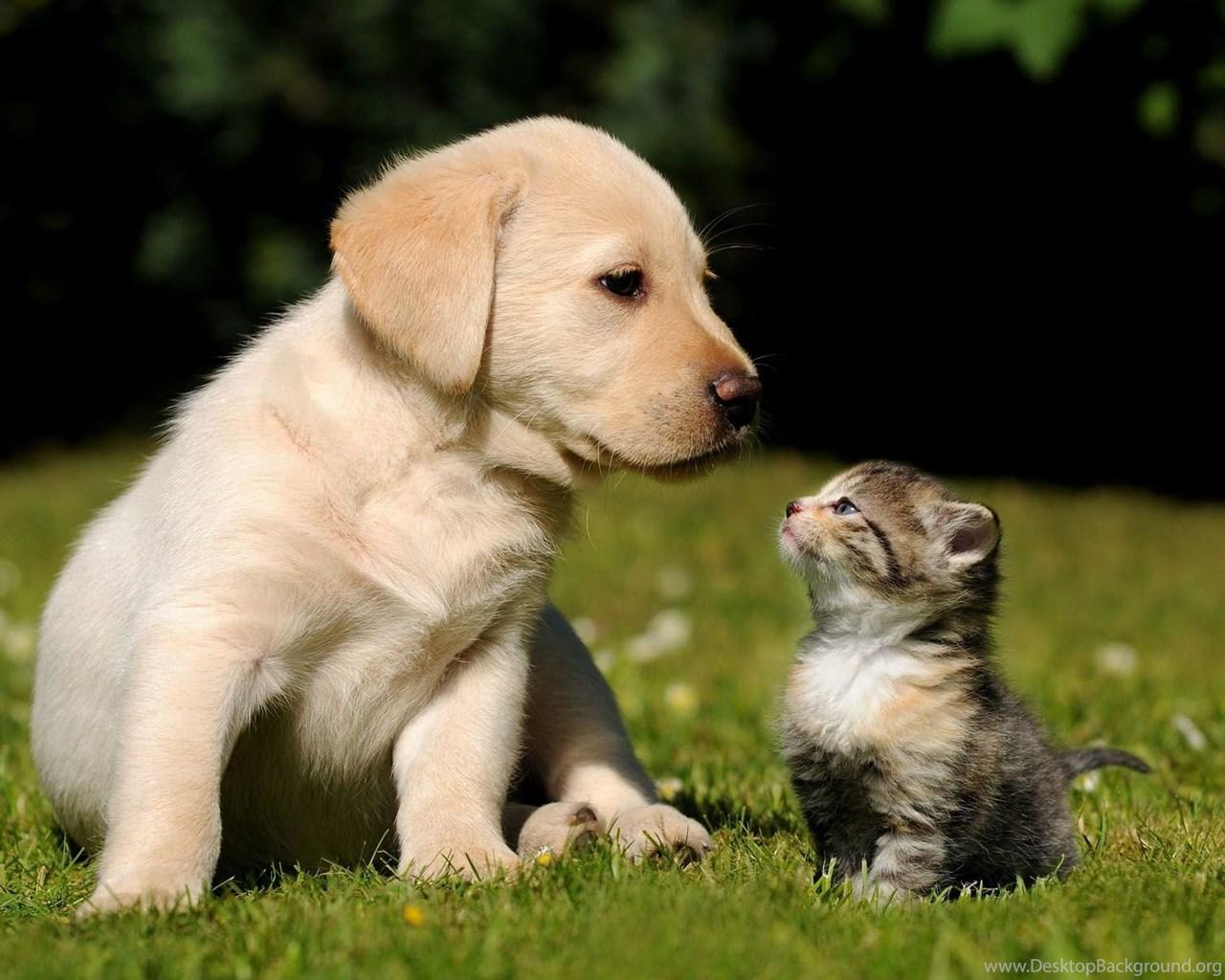 cute golden retriever puppy hd desktop wallpapers hd desktop