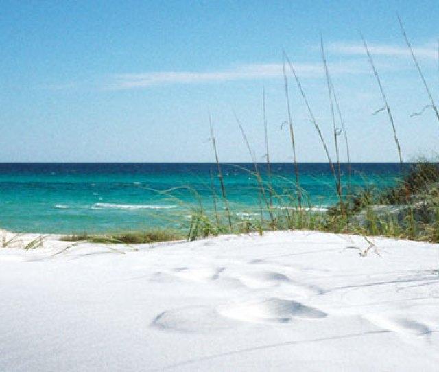 Florida Beaches Grayton Beach Dunes