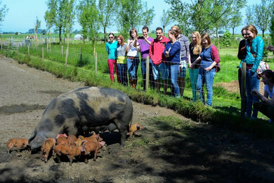YFM op excursie bij een biologische varkensboer.