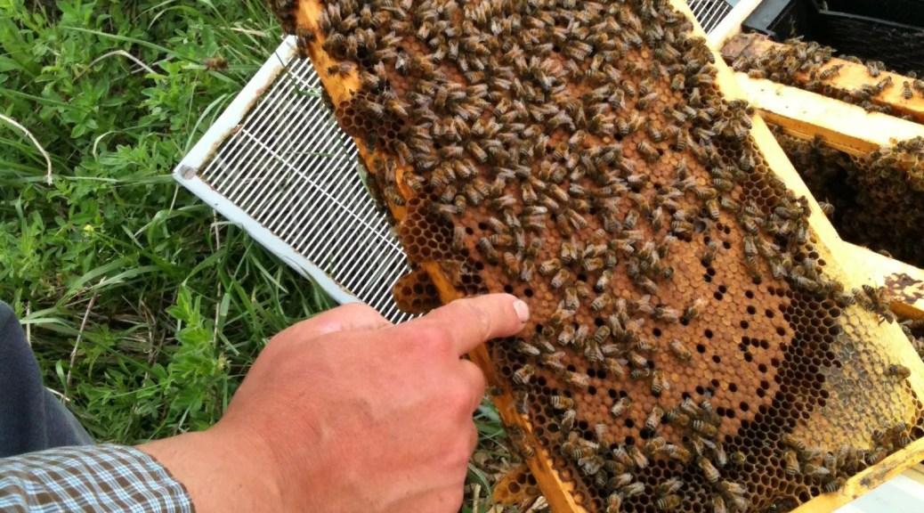 Des Moines Iowa bee club
