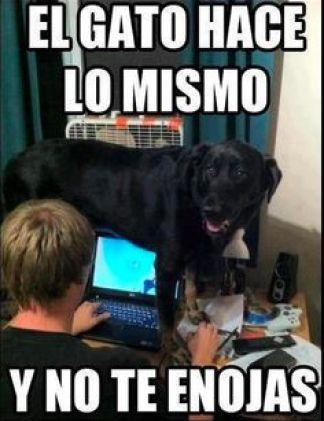 memes-whatsapp-de-animales-15