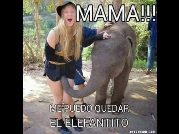 memes-whatsapp-de-animales-24