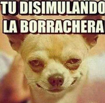 memes-whatsapp-de-animales-3