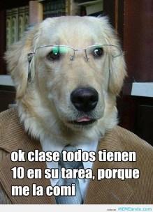 memes-whatsapp-de-animales-9