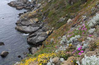 Un sentier par endroits parsemé de fleurs sauvages