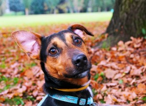 Bye Bye Fleas! Easy Hacks To Stop Your Dog Getting Fleas