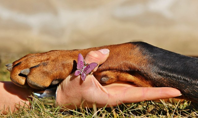 fascinating-things-you-discover-about-yourself-when-you-have-a-pet3