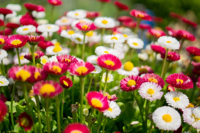 flowers-garden-colorful-colourful