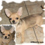 Otello 8 mois