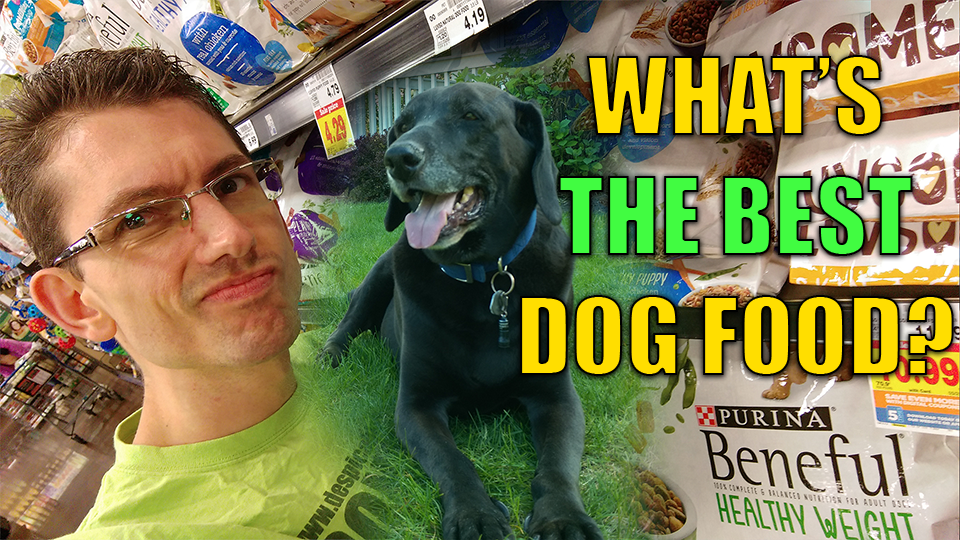 The Best Dog Food. Weight Loss. How We Saved Our Dog From Alzheimer's.
