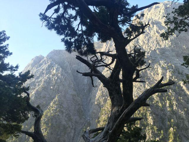 Samaria Gorge- Mountain Gigilos in Chania