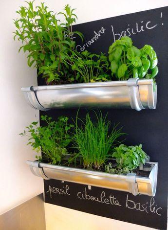 jardin d'herbes aromatique intérieur