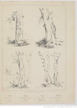 étude de troncs d'arbre extrait d'un cours sur le paysage - Gallica 1834