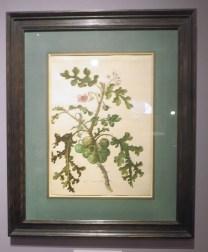 Plant de tomate Litchi