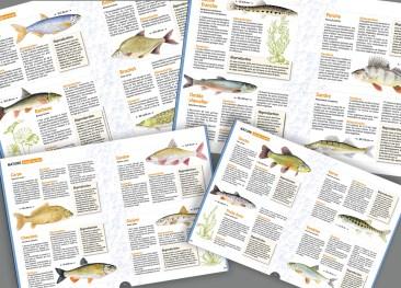 16 poissons de rivière