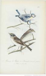 gravure oiseau