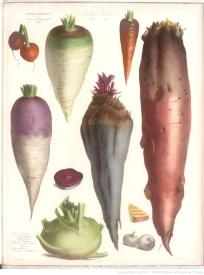 legumes peints