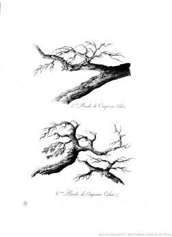 """extrait du livre """"Principes raisonnés du paysage"""" de Mandevare"""