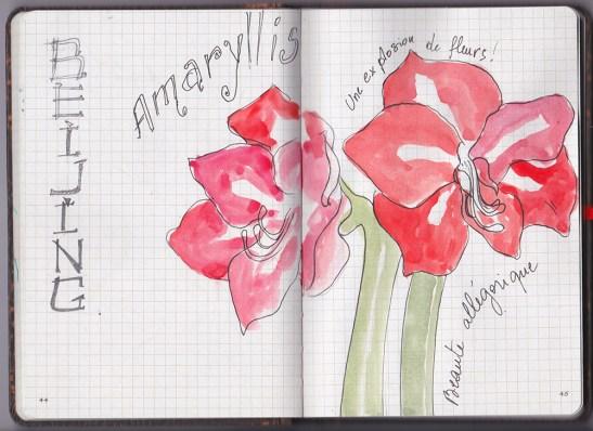 croquis -fleurs d'amaryllis