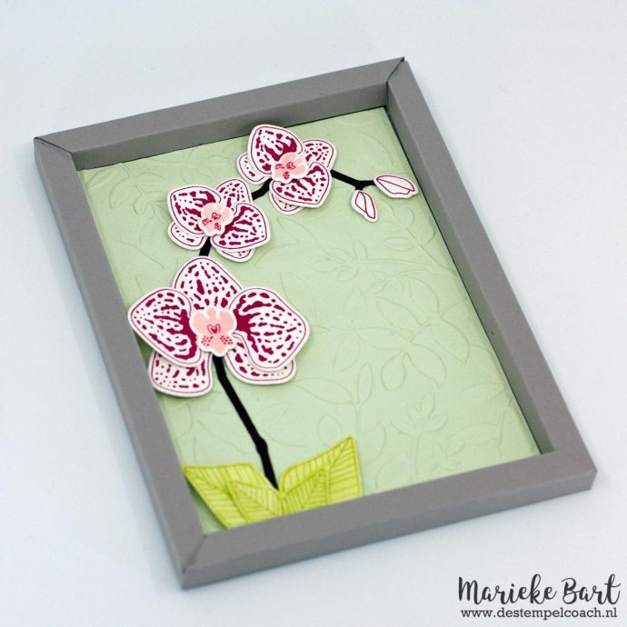 Climbing Orchid Stamp Set and Orchid Builder Framelits Dies by Stampin' Up!