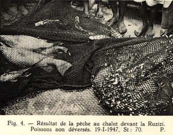 Résultat de la pêche au chalut devant la Rusizi / Ruzizi.