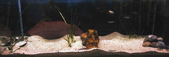 Aquarium à vocation sabulicole .