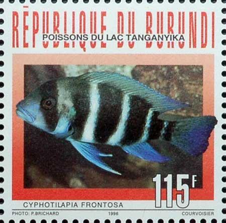 Cyphtilapia frontosa du Burundi en timbre.